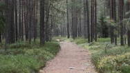 Stock Video Footage of Path in the forest.