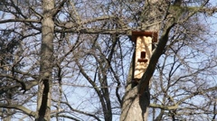 Birdhouse on a tree - stock footage