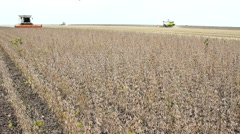 Combine harvest in field Soybean field, 1920x1080 full hd footage Stock Footage