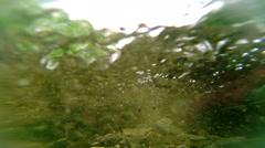 Spawning  Sockeye Salmon Stock Footage