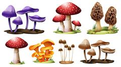 Different types of mushrooms Stock Illustration