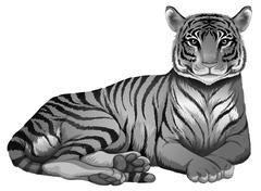 A grey tiger Piirros