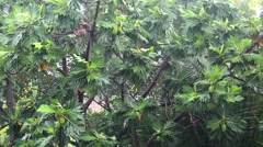 Tropical downpour. Trees and pouring rain Stock Footage