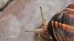 Snail choose the direction Stock Footage