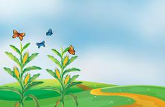A corn field at the hill with butterflies Stock Illustration