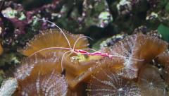 Aquarium shrimp Stock Footage