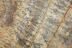 intricate fern-like markings on sandstone - stock photo