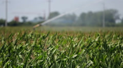 Agricultural Sprinkler Spraying Corn field on a Farm Stock Footage