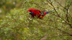 Parrot on a tree branch Stock Footage