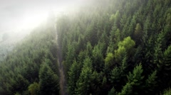 Forest Flyover with Morning Fog Stock Footage