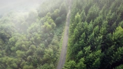 Forest Flyover with Morning Fog - stock footage