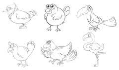 Different birds in doodle design Piirros