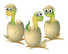 Stock Illustration of Three newly cracked eggs of a snake