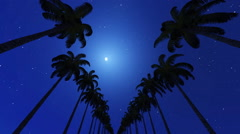 Palm alley in the moonlight night Stock Footage