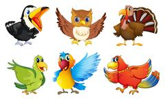 Different kinds of birds Piirros