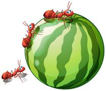 A watermelon with three ants Stock Illustration