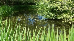Small pond timelapse, 15x speed. Stock Footage