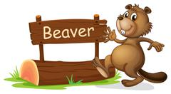 A beaver beside a wooden signage - stock illustration