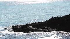 Birds cormorants landed on a rock in the sea coast Stock Footage