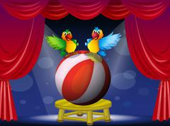 Two colorful parrots at the stage Stock Illustration
