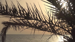 Landscape with palm leaves and Mediterranean Sea at sunset. Stock Footage
