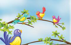 Colorful birds talking Piirros