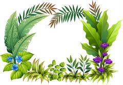 Plants and flowers Stock Illustration
