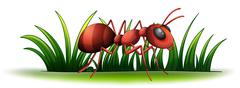 An ant Stock Illustration