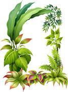 Leafy plants Stock Illustration