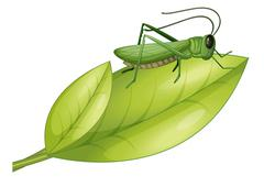 A grasshopper and a leaf - stock illustration