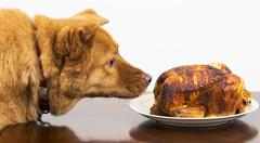 Dog about to eat rotisserie chicken Stock Photos