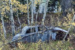 Old car wreck in the birch forest of Canada in fall. - stock photo