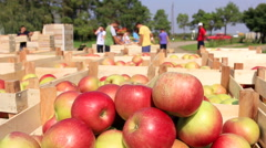 Apple picking and sorting on Farm - stock footage