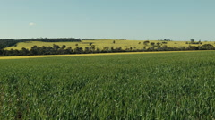 Wheat and Canola Crops on an Australian Farm - stock footage