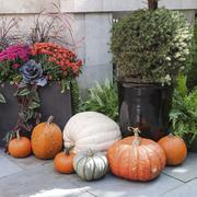 Stock Photo of Tasteful Fall Decorations