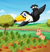 Toucan over farm Stock Illustration
