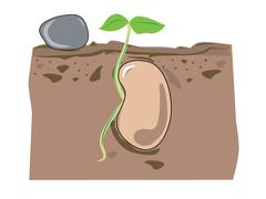 seed growth - stock illustration