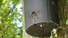 Hornets in a bird house Stock Footage