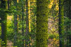 moss and the forest. mossy forest closeup. - stock photo