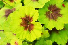 Green leaves closeup photo. botanic theme. Stock Photos