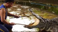Crocodile Handler Shows Crocodile Mouth. Thailand. Stock Footage