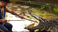 Thai Tamer Shows Crocodile Mouth. Stock Footage