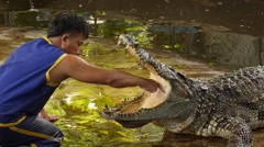 Horrifying Show. Tamer Putting Hand in Crocodile Mouth. Stock Footage