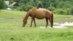 Horse grazing on pasture and eating green grass Stock Footage