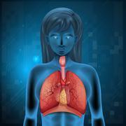 Human respiratory system - stock illustration