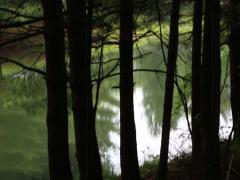 Rack Focus of Trees in Foreground of Natural Pond Stock Footage