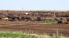 Pan Shot of Cattle Stockyard Stock Footage