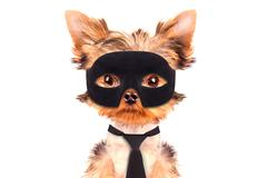Super hero puppy dog Stock Photos