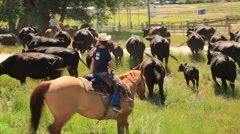 Woman on Horseback Driving Cattle Stock Footage