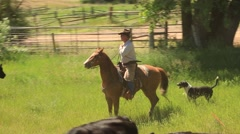 Rancher on Horseback and His Dog Driving Cattle Stock Footage